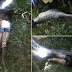 SHOCKING!! Indonesians Cut Open A Giant Python And Discover Their Missing Friend Inside