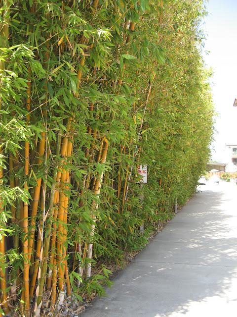 Bamboo in Santa Barbara: LadyD Books