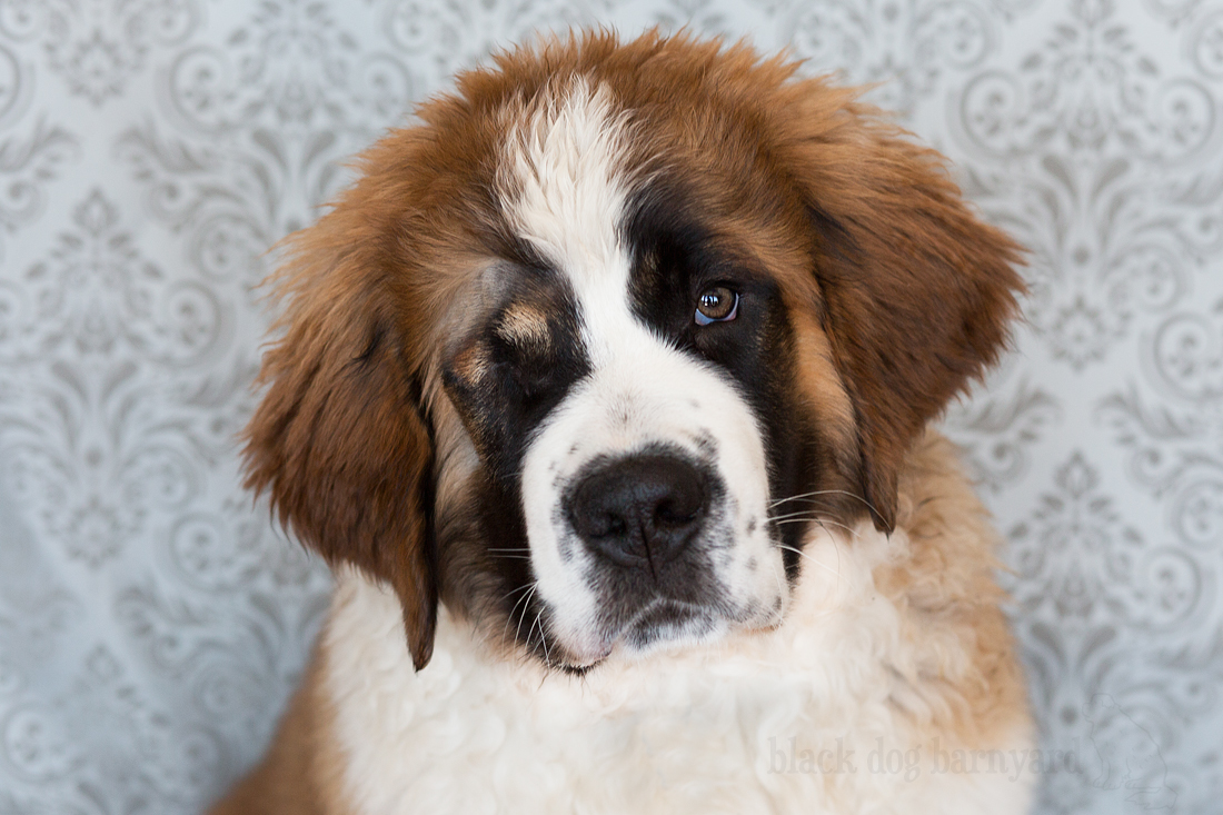 Dog Breeder Bancroft Ontario
