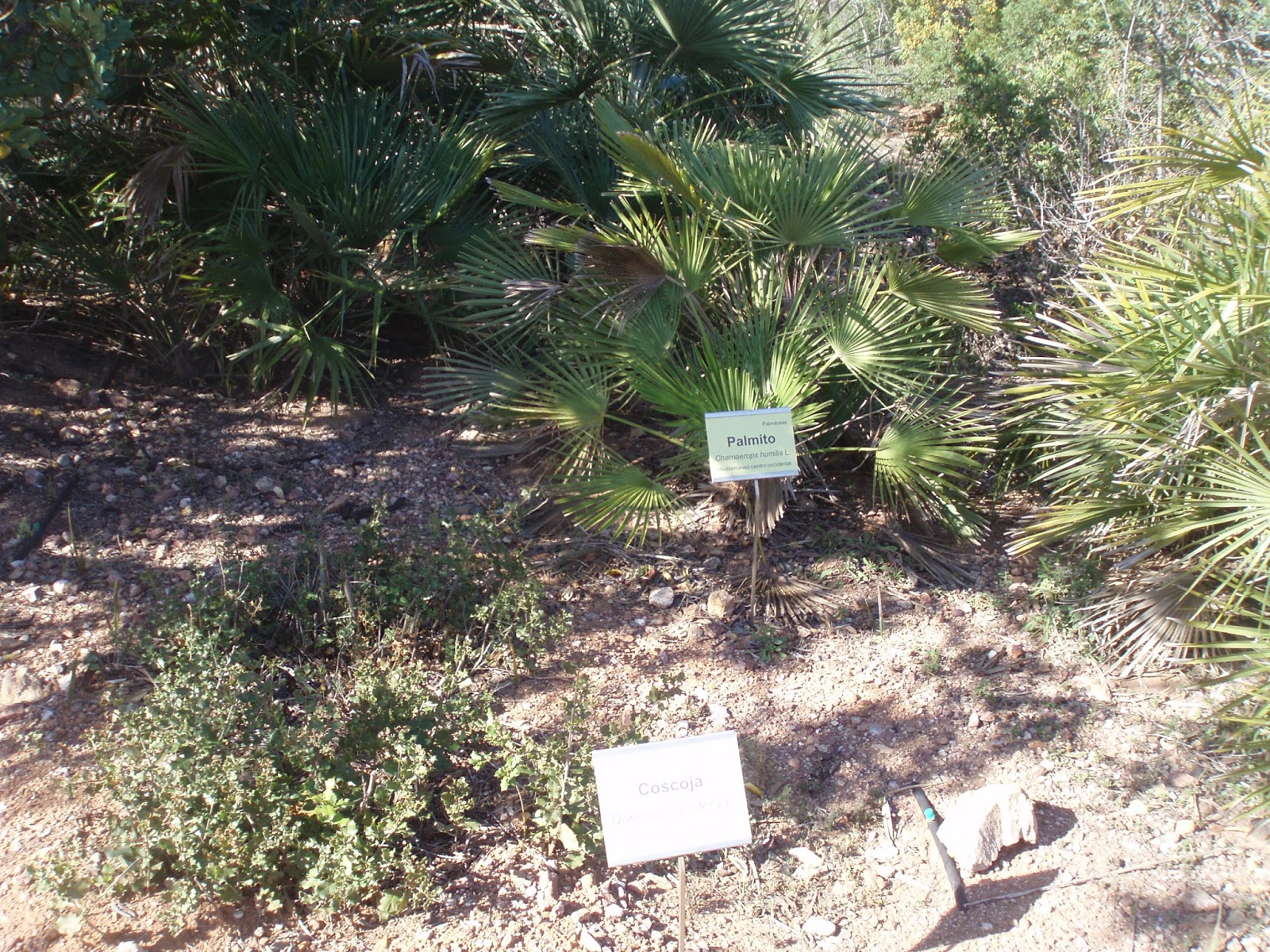 Crear un jard n jard n bot nico el albardinal for Jardin botanico almeria