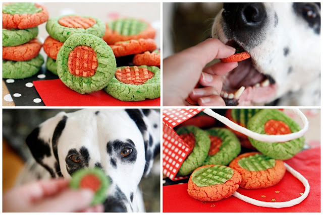 Dalmatian dogs eating red and green homemade Christmas dog treats