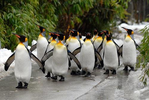 نتيجة بحث الصور عن حديقة الحيوانات في زيورخ