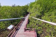 Magrovenwald bei alten Königspalastzwischen Cha Am und Hua Hin