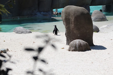 Piscina Pinguini Zoom