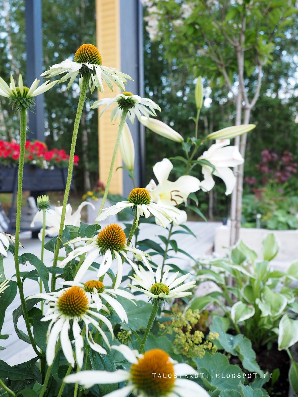 istutuslaatikko, betoniallas, kukkia