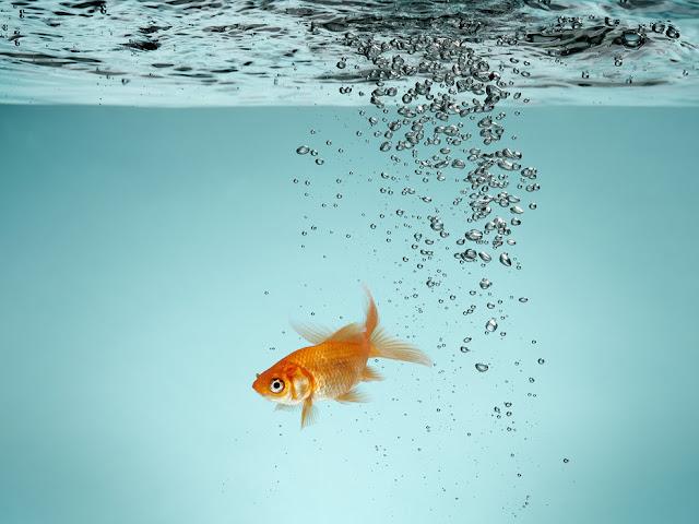 Akvaario tapetti kalat koralli veden alla lapset Lapset