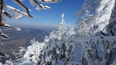 Blick durch verschneite Bäume ins Tal