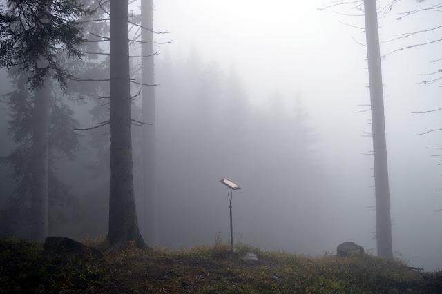 bosco che suona