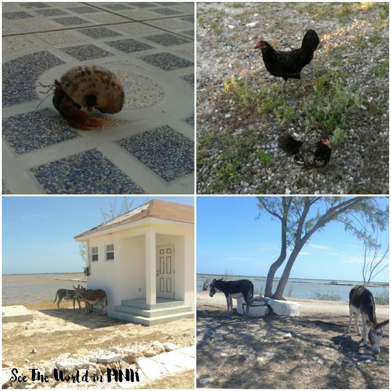 "Travel Post - My Turks and Caicos Vacation Part 3 Recap ""Salt Cay"""