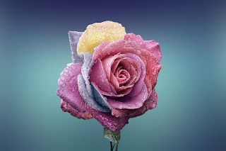 The image of the rose is used to represent the encouragement to stop and smell the roses