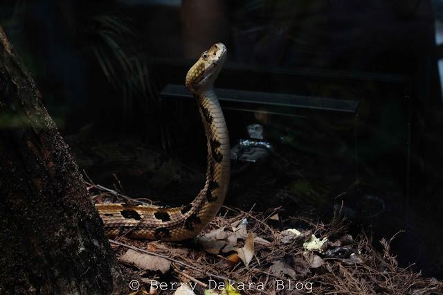 berry dakara, atlanta, zoo, zoo atlanta, travel atlanta, discover georgia, atlanta tourist, snake