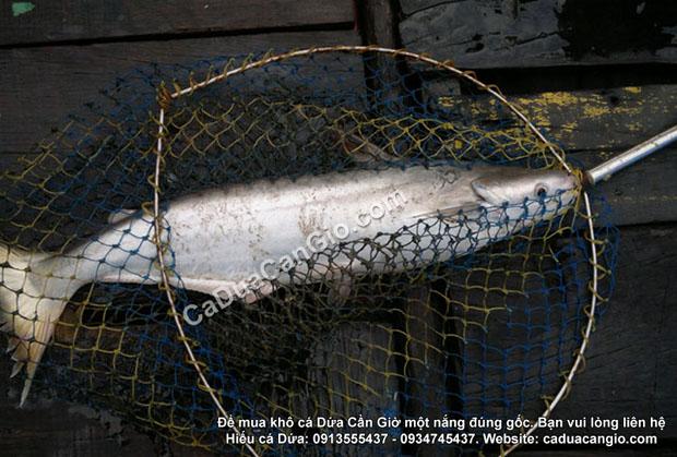 Bán đặc sản cá dứa 1 nắng Cần Giờ