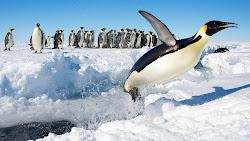 Emperor Penguin in Antarctica 1920x1080 HD