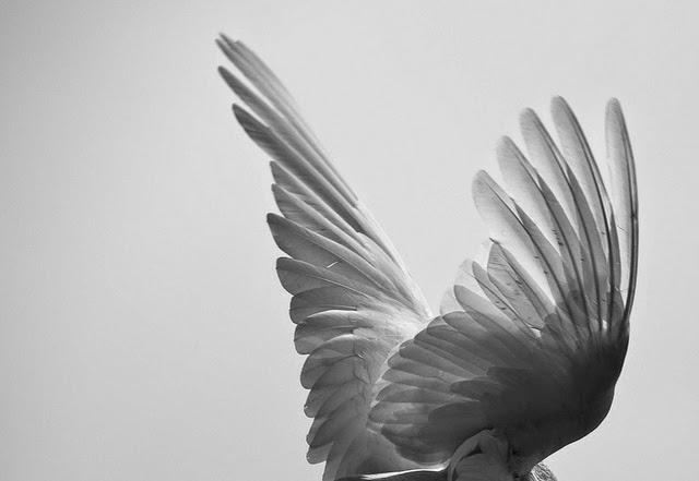 Kisah Sujudnya Para Malaikat Kepada Nabi Adam Yang Membuat Semua Orang Terharu Membacanya
