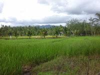 Tinggal di Pedesaan dan Inilah Beberapa Tips Cara Memanfaatkan Tanah Kosong di Pinggiran Sawah