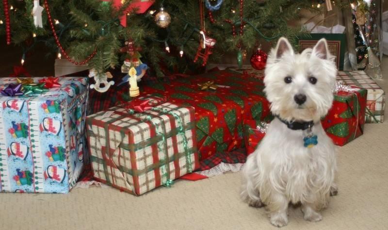 Θωρακίστε σε 5 βήματα το Χριστουγεννιάτικο Δέντρο!
