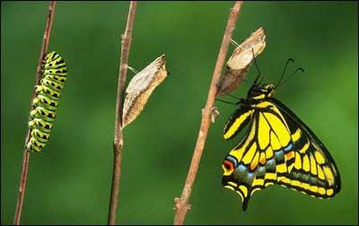 [Image: butterfly21.jpg]