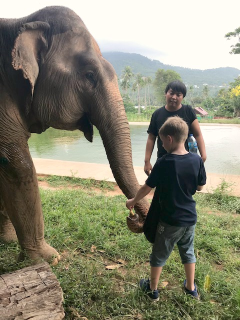 feeding an elephant at the samui elephant sanctuary