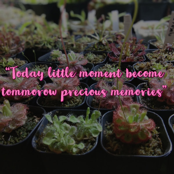 Today Little Moment Become Tommorow Precious Memories
