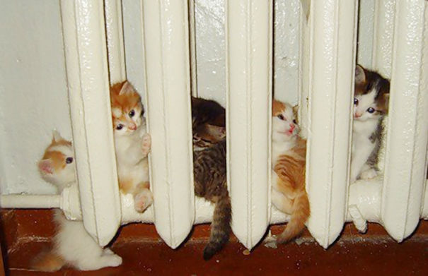 Funny cats - part 253, best cat images, funny cat photo