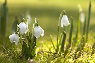 Пришла долгожданная весна