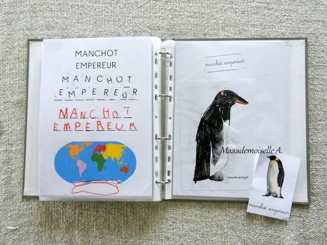 || Activité autour des cartes de nomenclature : Représenter et comparer des animaux (manchot empereur)