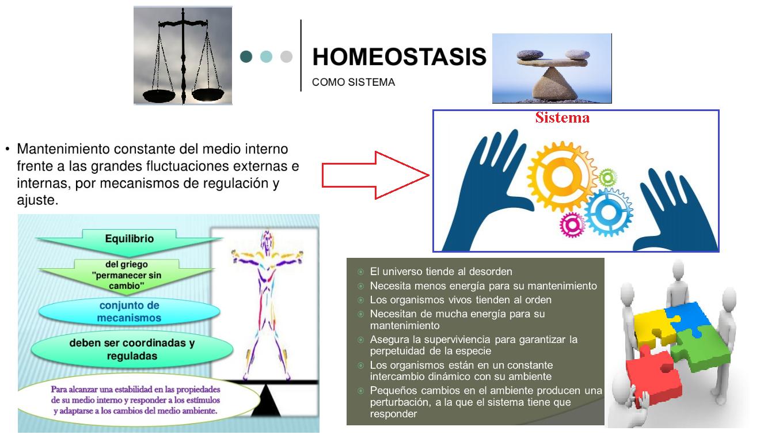 homeostasis griego