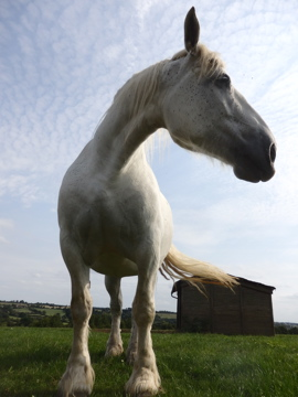 beautiful horse photo