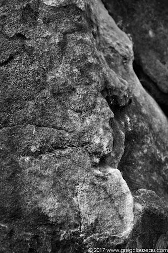 Le blanc menton, Fontainebleau