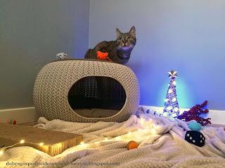 kot na legowisku, kot w domku, domek dla kota