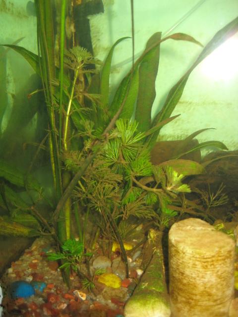 My Fresh Water Aquarium Natural Planted Tank Walstad
