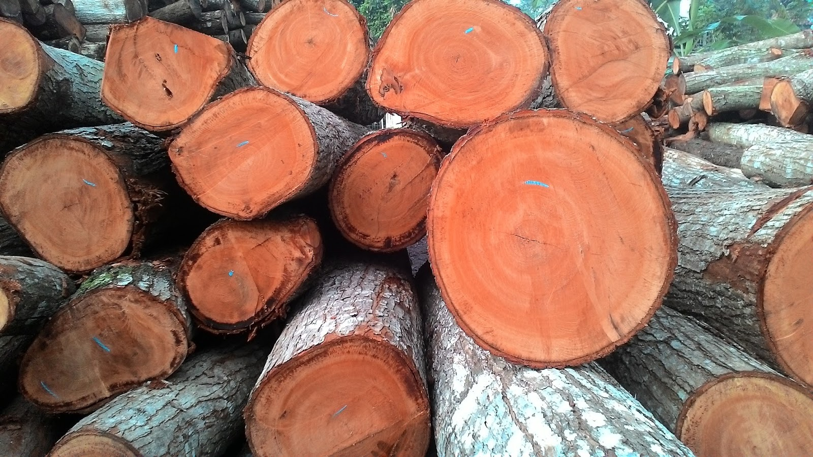 Ketentuan Pengangkutan Kayu Hutan Hak Dengan Nota Angkutan