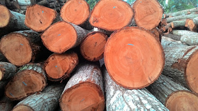 Dokumen nota angkutan kayu masyarakat