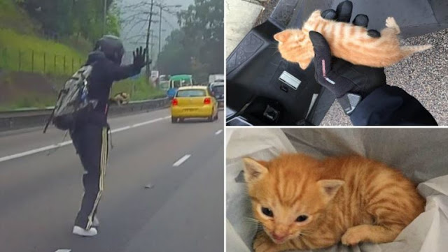 Brave Motorist Heroically Saves A Tiny Kitten In The Middle Of The Street During Rush Hour Traffic!