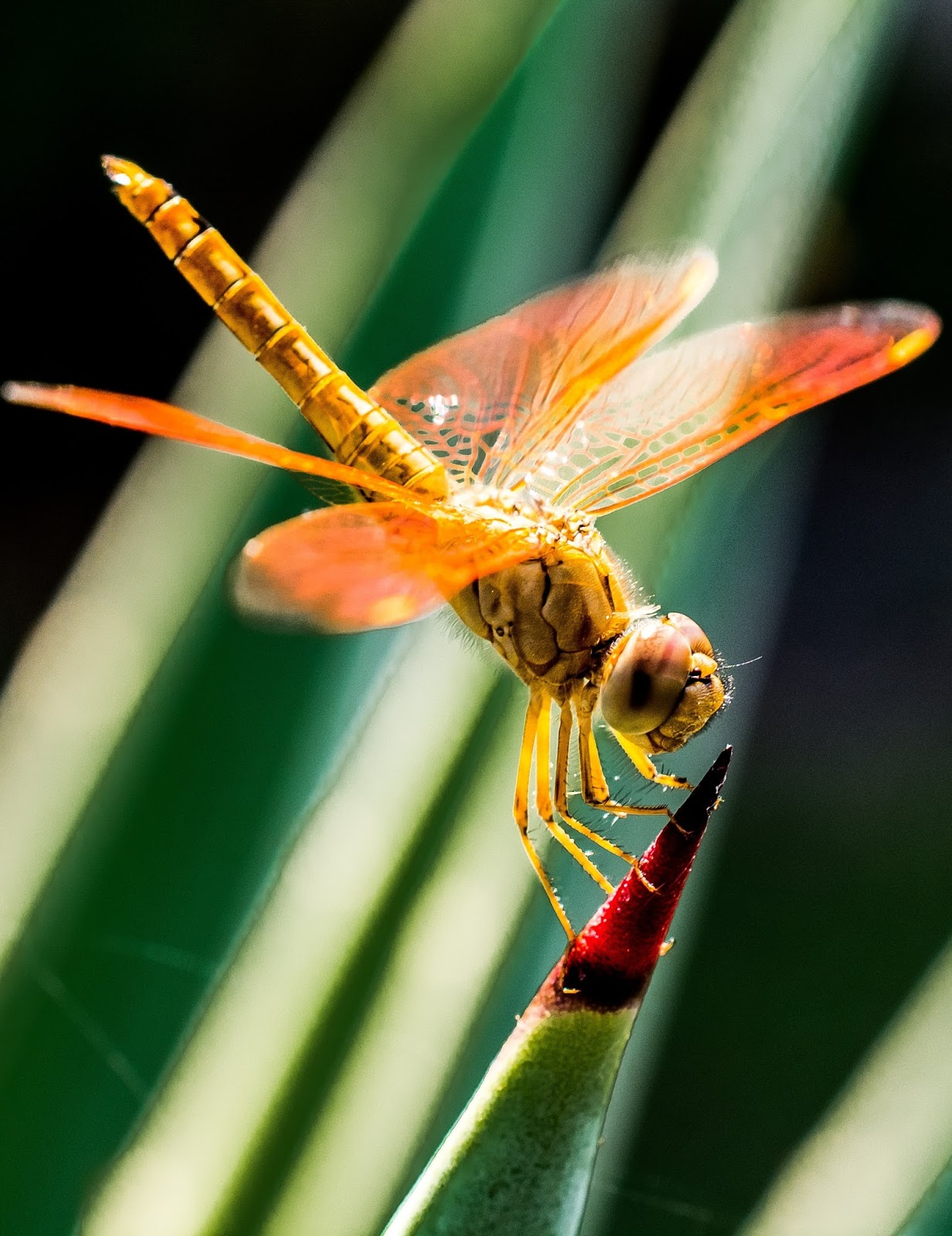 Image of a dragonfly.