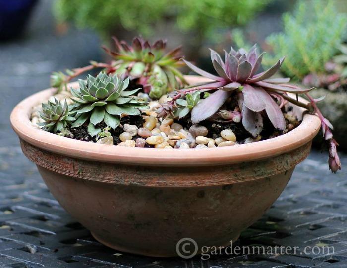 10 arreglos con plantas suculentas guia de jardin - Composiciones de cactus ...