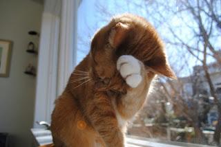 Mengatasi Kucing Pemalu