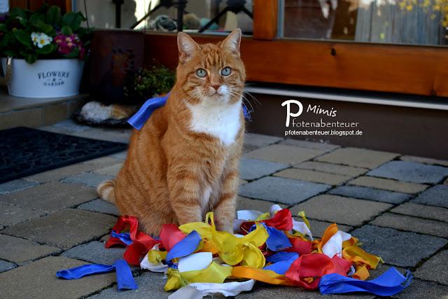 Katze Mimi mit vielen bunten Bändern