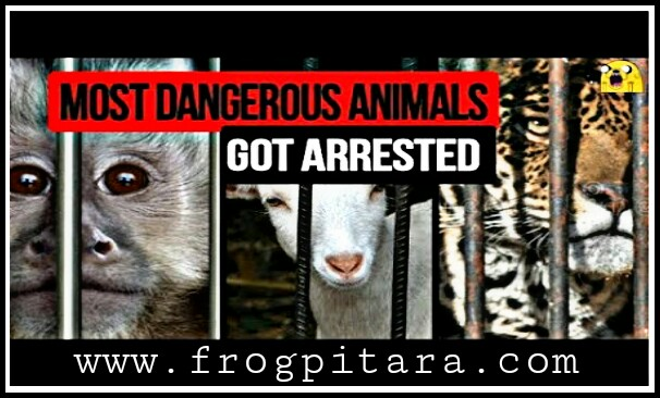 Top 10 Amazing facts in hindi | 10 Animals That Have Been Arrested for their serious Crimes