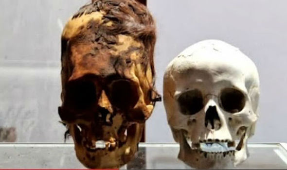 One of the alleged Antarctic elongated skulls compared to a standard human skull