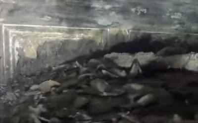 Ναυάγιο του 1895 «έκρυβε» πίνακες αξίας εκατομμυρίων δολαρίων