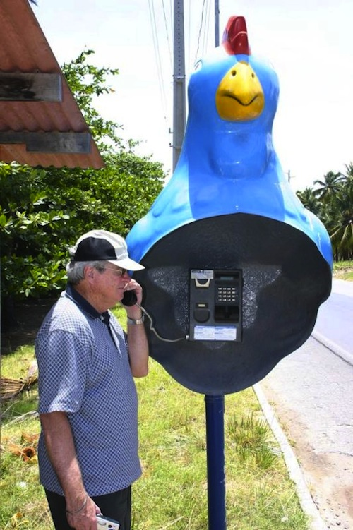 Brazilian chicken phone booth