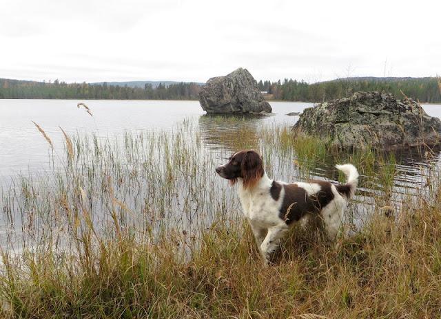Hällmålning Stor-Åbodsjön