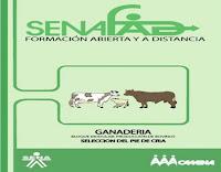 producción-de-bovinos-3-selección-del-pie-de-cria