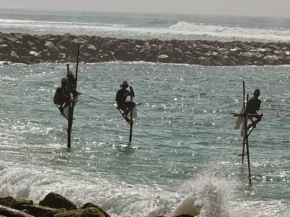 Nelayan Sri Lanka Guna Kayu Panjang Untuk Menggantikan Perahu Semasa Memancing (8 Gambar)
