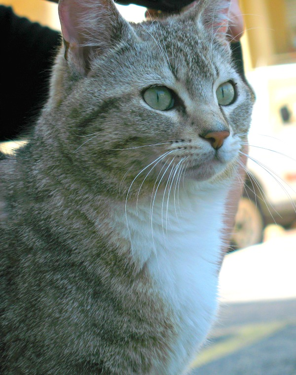 cat of le cannet
