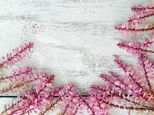 Beautiful Floral Blossom Lighting Style Beautiful Floral Blossom Lighting Style spring flower border frame wood background colorful pink wooden 66809730