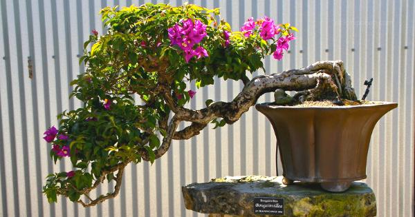 5 Spesies Pohon Untuk Membuat Bonsai Bagi Pemula Ciriciripohon Com