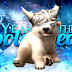 Year of the Polar Bear Party