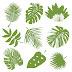 45 Jungle Tropical Leaves Photoshop Brush